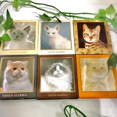 猫好きにはたまらない。。❤︎愛され猫の愛されメイク、、中国コスメ【ヴィーナスマーブル】キャットシリーズアイシャドウ✨