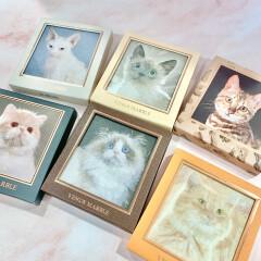 【愛され猫の愛されメイク〜VenusMarble(ヴィーナスマーブル)〜】ネコ好きさんパケ買い必須🐈キャットシリーズ🐈⬛