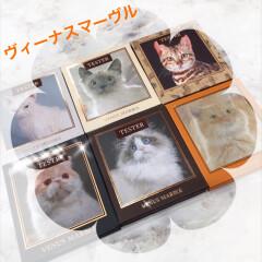 愛され猫の愛されメイク♡VenusMarble(ヴィーナスマーブル)発売中✨